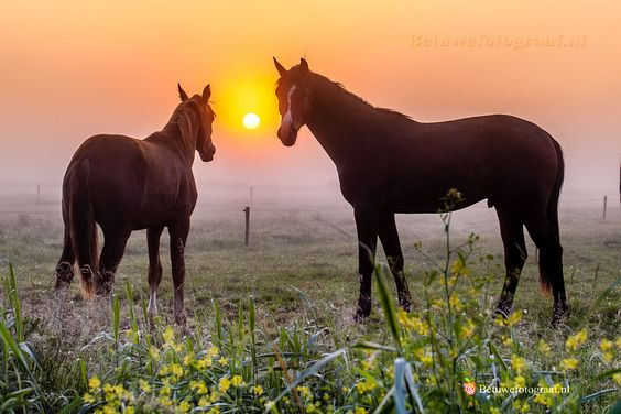 Horses in the mist........VI by Marinus Keyzer de on 500px