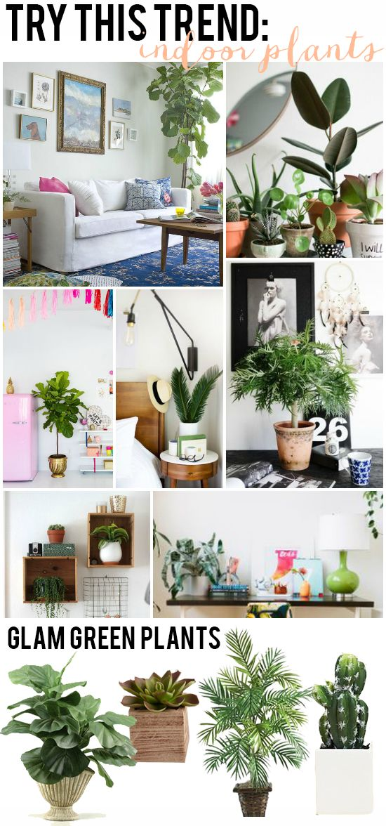 Try This Trend: Indoor Plants | Fiddle Leaf Fig, Palm, Cactus + Succulent