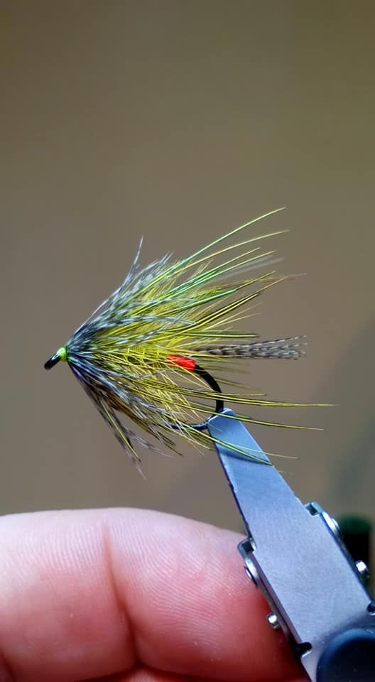A Bit Of An Experiment For Next Year By Dave Tuohy In 2021 Fly Fishing Flies Pattern Fly Tying Patterns Fly Patterns