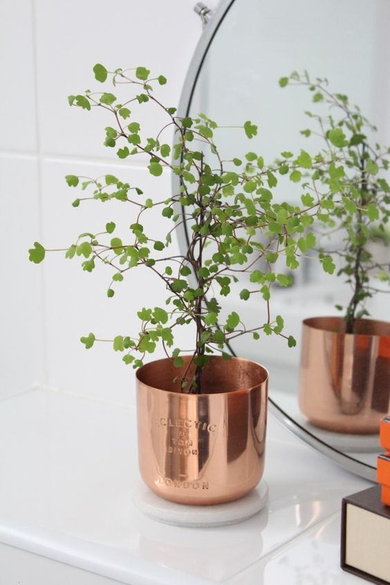 Copper Tom Dixon candle turned into a plantpot with a lovely litte fern in it.::
