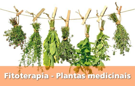 Fitoterapia – Plantas medicinais   http://saudenocorpo.com/fitoterapia-plantas-medicinais/