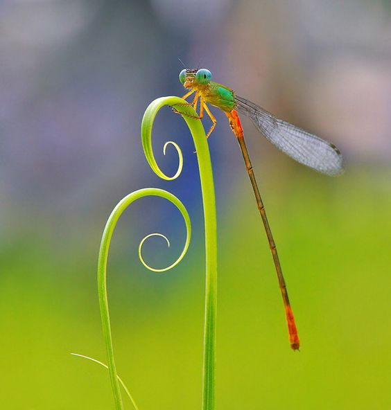 """Perch"" by Nordin Seruyan.....actually it looks more like a dragonfly...."