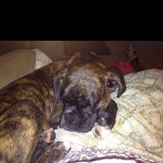My Taylor, love my boxer!!