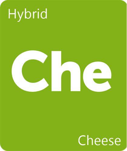 Cheese Strain Information