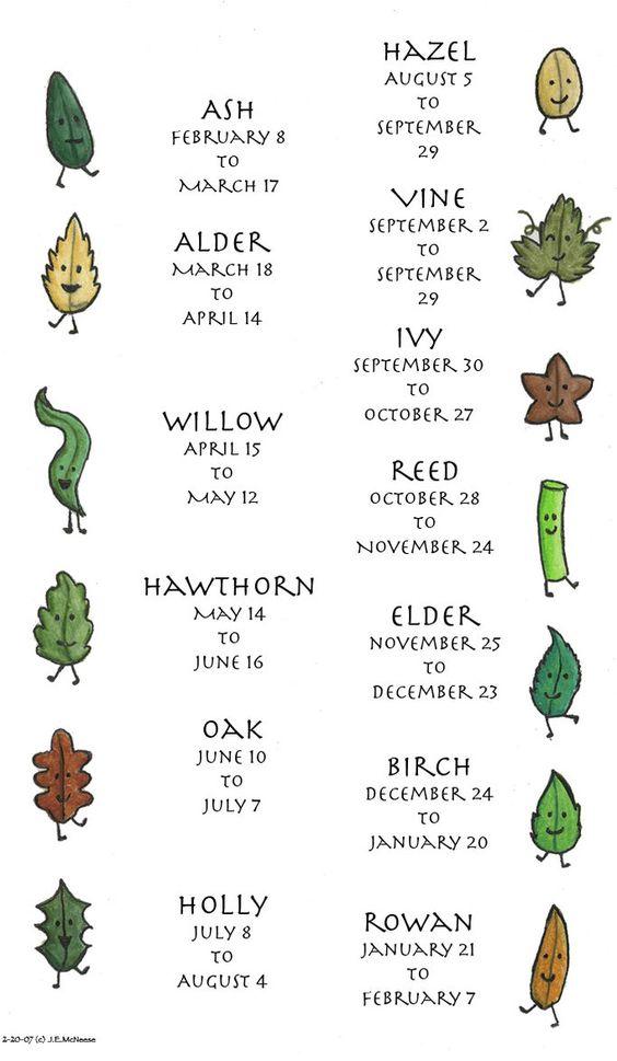 """""""Treze Meses das Árvores"""". São 13 períodos, os quais cada um deles é regido por uma árvore do """"Ogham"""" Ogham é um alfabeto celta associado à algumas árvores cujo os símbolos, acredita-se, eram também utilizados como oráculos. Havia também um calendário relacionado a este alfabeto que foi denominado """"Beth-Luis-Nion"""". Cada período em questão conta com uma árvore correspondente.:"""