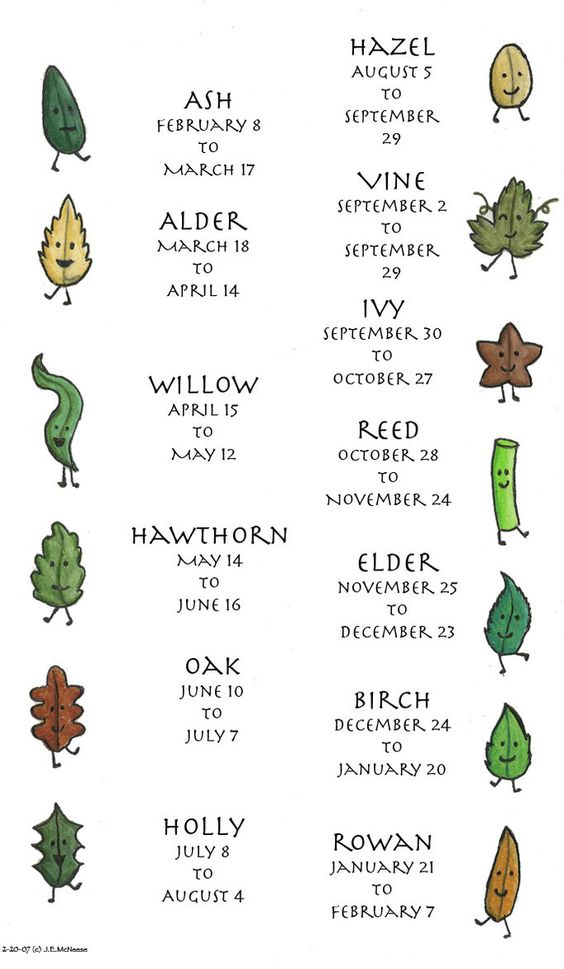Celtic Tree Calendar.