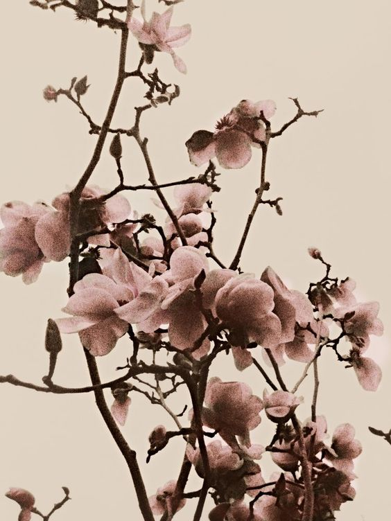 New Orleans Spring Blossoms Art Print By Popko Studio X Small Origin And History In Densely Populat Blossoms Art Japanese Cherry Blossom Spring Blossom