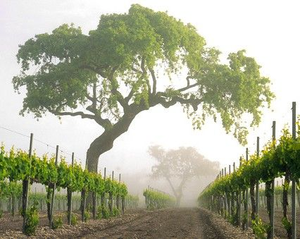 Vineyard Spring And Love This On Pinterest