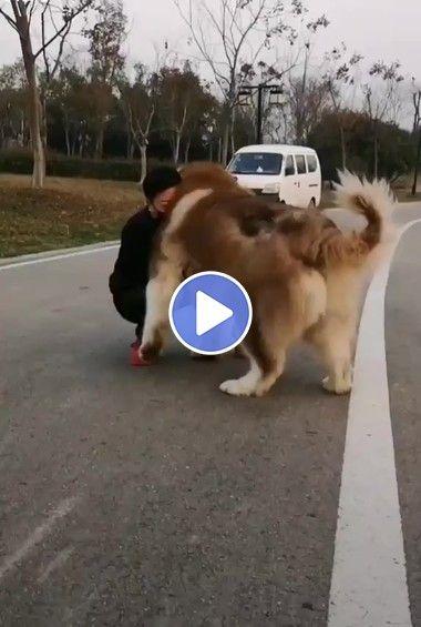 Criança e o seu gigante cachorro