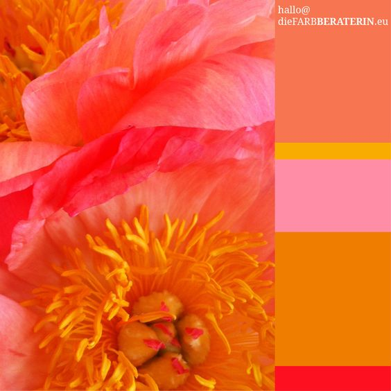 #farbinspiration #peach #pink #peonia #pfingstrose #farbpalette #farbprofil #farbharmonie #farbe #quantität #proportion #farbberatung #diefarbberaterin  #orange #pink #lachs #rot  #color #palette #scheme #inspiration #colour #consutlant  #orange #salmon #red #pink  www.diefarbberaterin.eu