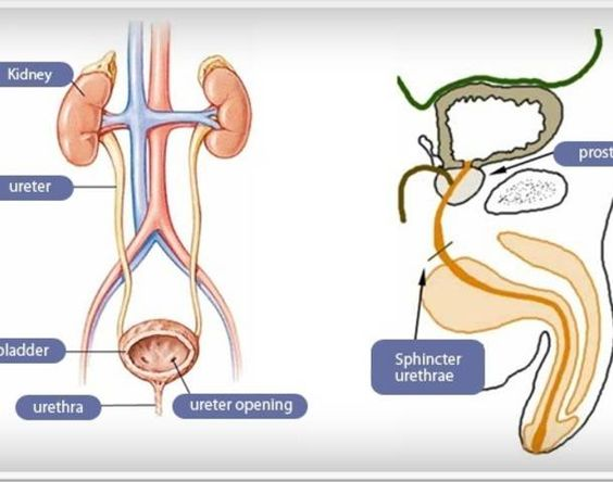 Urology Hospitals Treat Men's Reproductive and Urinary Problems Effectively