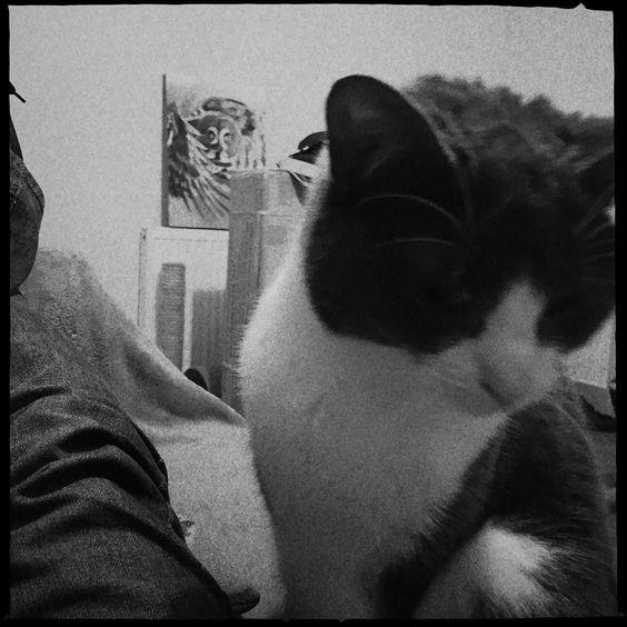 Sylvia. #catsofinstagram #cats #catstagram
