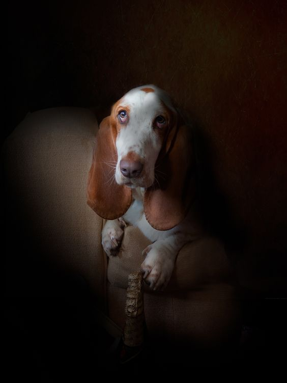 Rembrandt's Hound by Michael Crookes on 500px