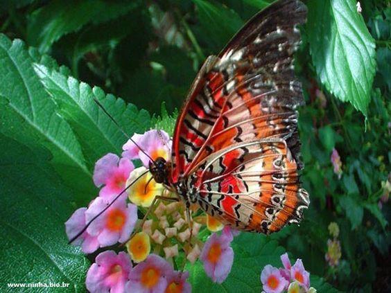 borboleta colorida pousada nas flores