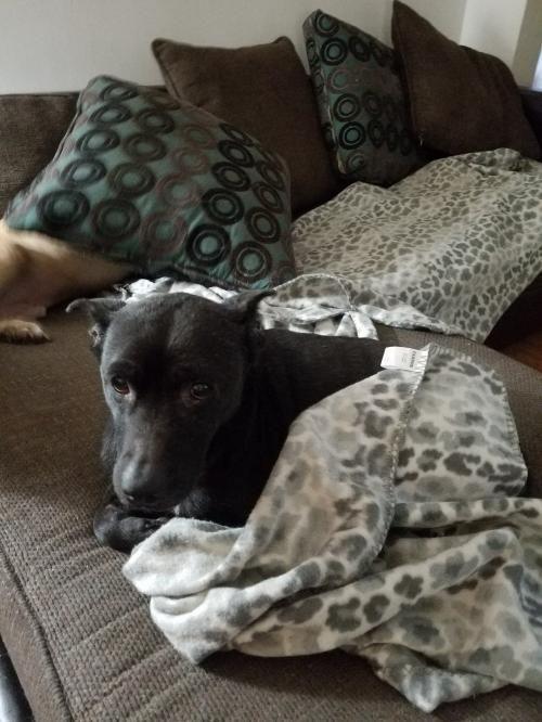 Dogs For Adoption Petfinder Dog Rocks Rescue Dogs