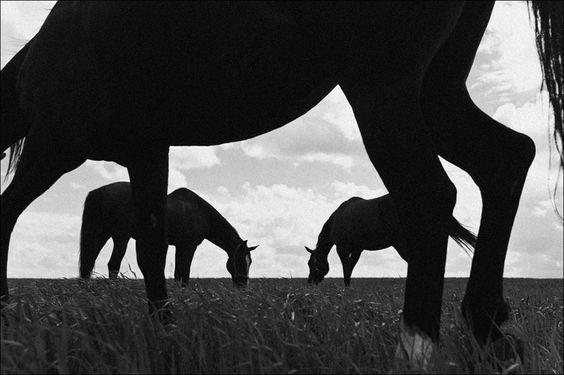 www.pegasebuzz.com | Equestrian photography : Dmitri Pryahin - Phases of Sleep