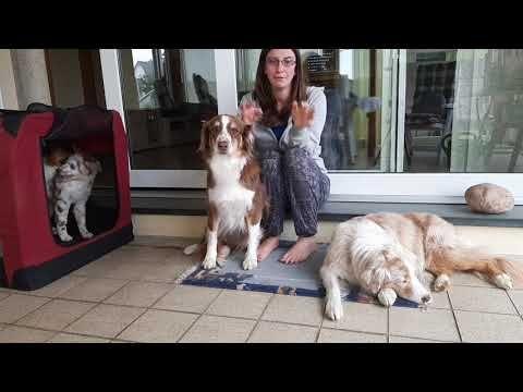 Pin Auf Hundeerziehung