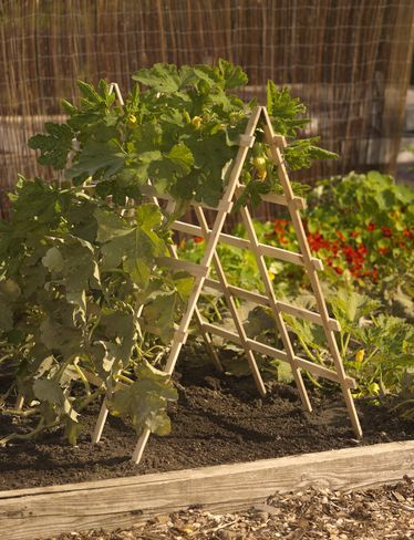 sturdy a-frame for squash in small space raised bed gardens... I wish I saw this sooner.