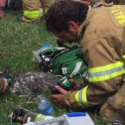 Deux chats survivent miraculeusement à un incendie