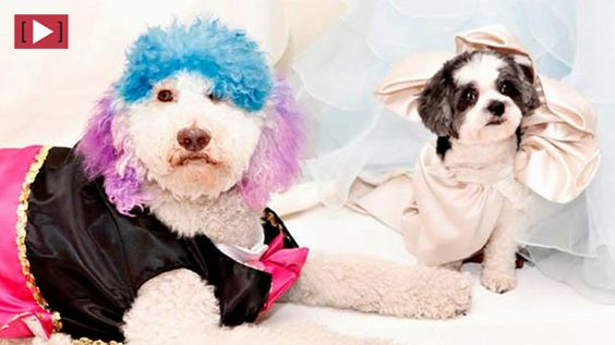 THE $250,000 DOG WEDDING  (my dogs will have to elope... or better yet, stay single):