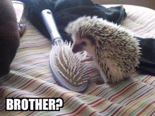 Porcupine! Named Cactus?