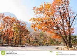Resultado de imagem para autumn trees park