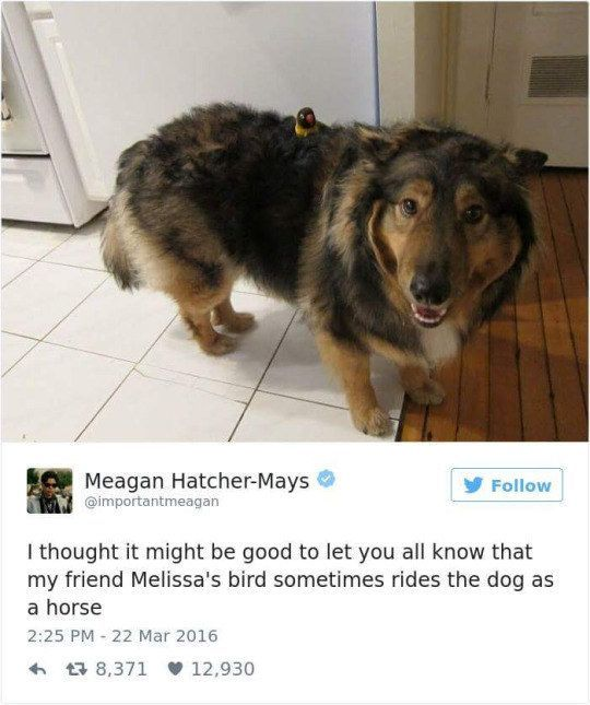 17 Dogs Who Deserve To Be Pet All They Want Dammit This Fuzzy
