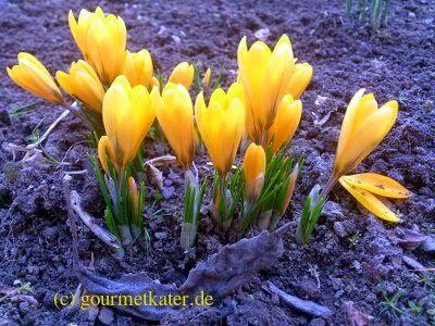Schon so etwas wie Frühling! #spring #garden #flower