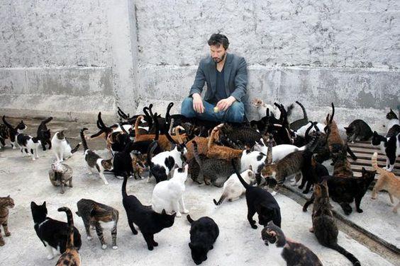De gatos