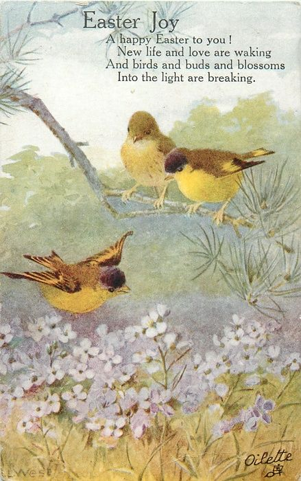 two yellow/brown birds sit on a branch while one fllies over violets: