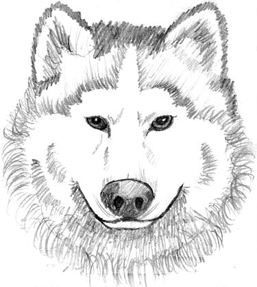 wolf drawings coloring pages - photo#34