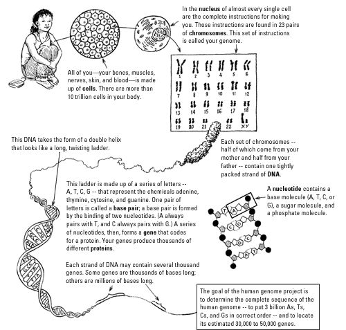 Genetic Code Worksheet - Khayav