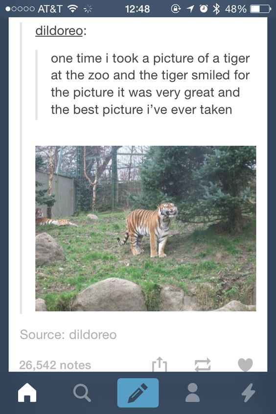 Funny Zoo Meme : Tumblr funny go animals pinterest cats texts and