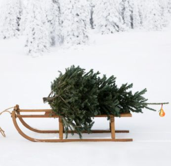 Christmas tree on sledge