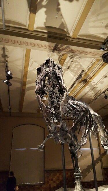 Skelett eines T-Rex im Naturkundemuseum Berlin