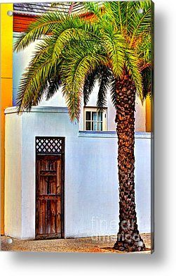 Sylvester Palm Tree Acrylic Print by C W Hooper