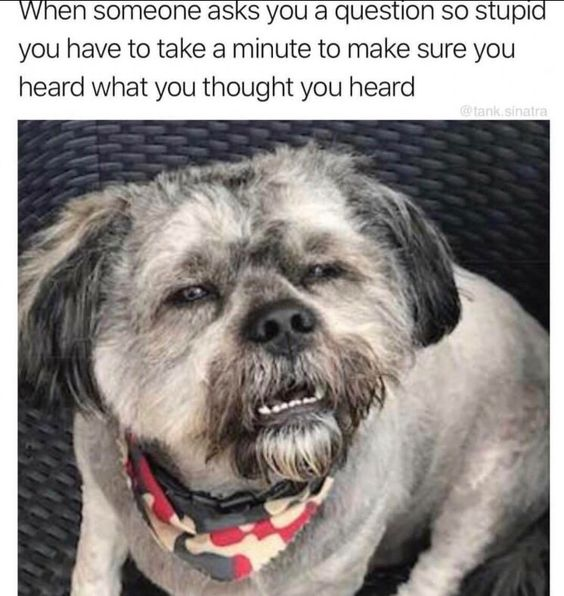 43 Funny Animal Memes