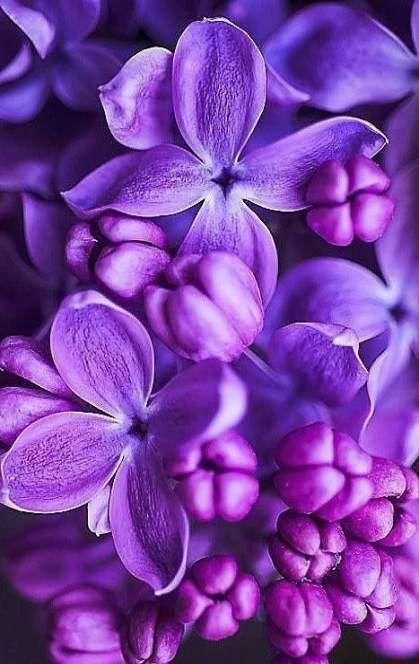 Tattoo Nature Sleeve Purple 51 Ideas Purple Flowers Wallpaper Light Purple Flowers Purple Flowers Best of purple flowers wallpaper for
