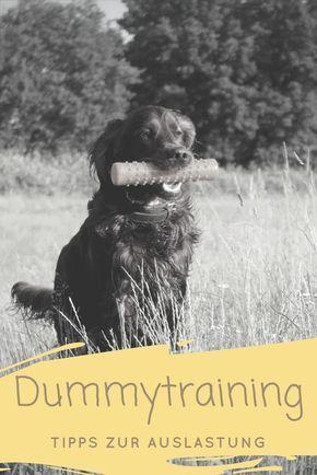 Dummytraining Zur Auslastung In 2020 Hunde Hundetricks Dummy Hund
