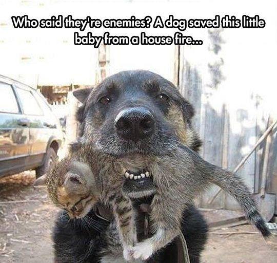 Hund rettet junge Katze aus dem Feuer.....