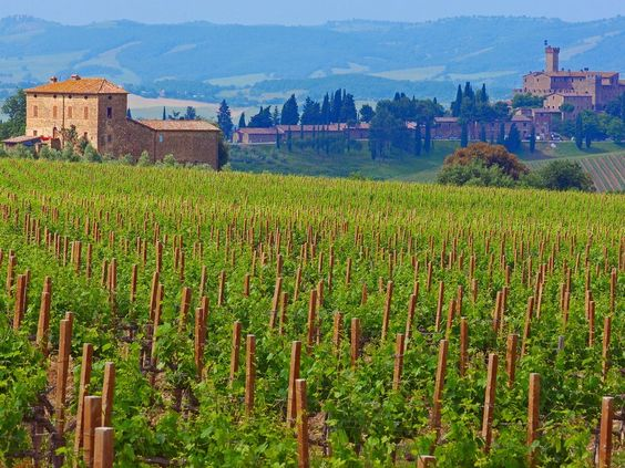 If you're looking to sample wine while you're in Italy, go straight to the source: These Tuscan wineries are excellent spots to learn about—and, of course, sample—wine.