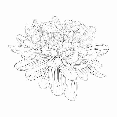 The Art Of Nature Coloring Book Fresh 17 Best Images About Advanced Nature Coloring Pages On In 2020 Flower Coloring Pages Dahlia Flower Tattoos Flower Drawing