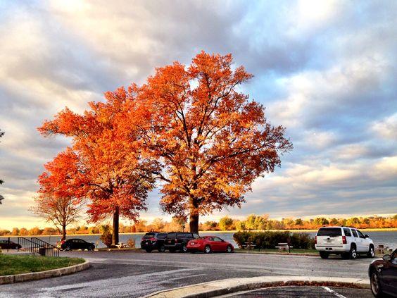 Fort McNair, el árbol naranja en otoño