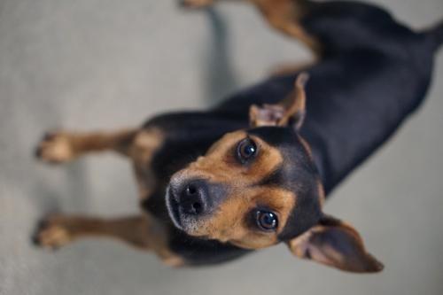 Pets For Adoption Petfinder Pet Adoption Pets Animals