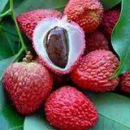 http://www.edihitt.com/noticia/maravilhosos-beneficios-da-fruta-lichia ediHITT é um website-agregando conteúdo de qualidade na net...cadastre-se grátis...