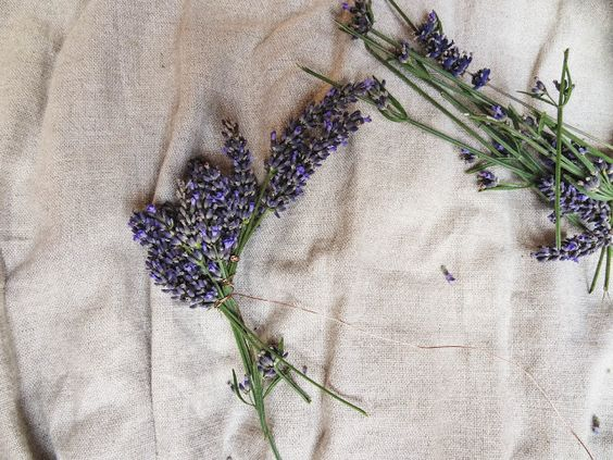 Daughter of the Woods: Crafting | Lavender Crown