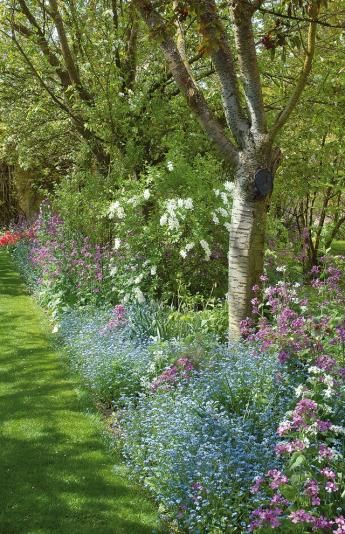 Quelles fleurs planter sous les arbres