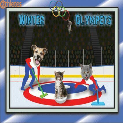 Animal olympivs