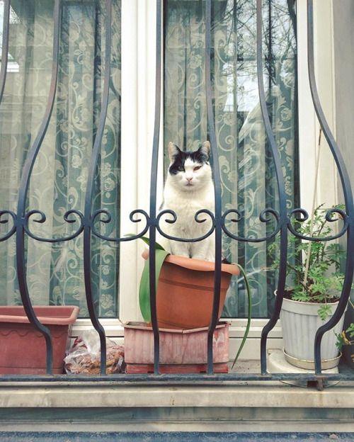 Via Onuraltunbuken Instagram Photo Websta Kitty Windowwindow Seatwindow