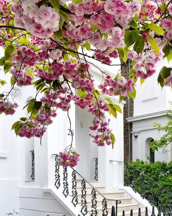 London Is The Last Cherry Blossoms And Soon London Will Be All Green Again But For Now Let S Still Enjoy The Cherry Blossom Blossom Nyc Spring